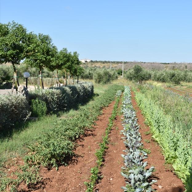 filari verdura orto