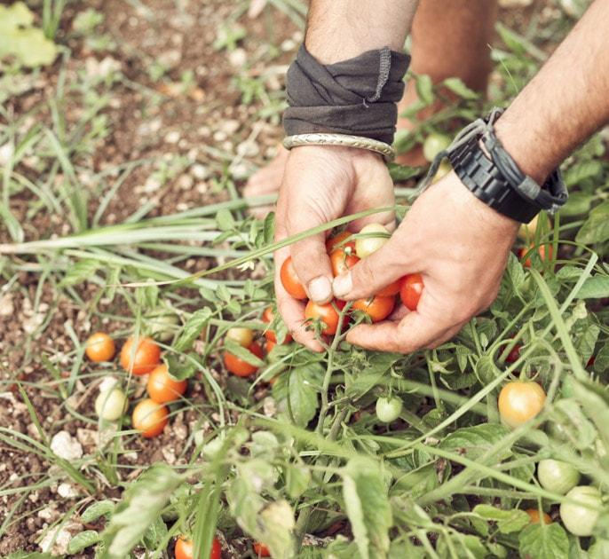 agricola samadhi agriturismo biologico cucina naturale vegetariana